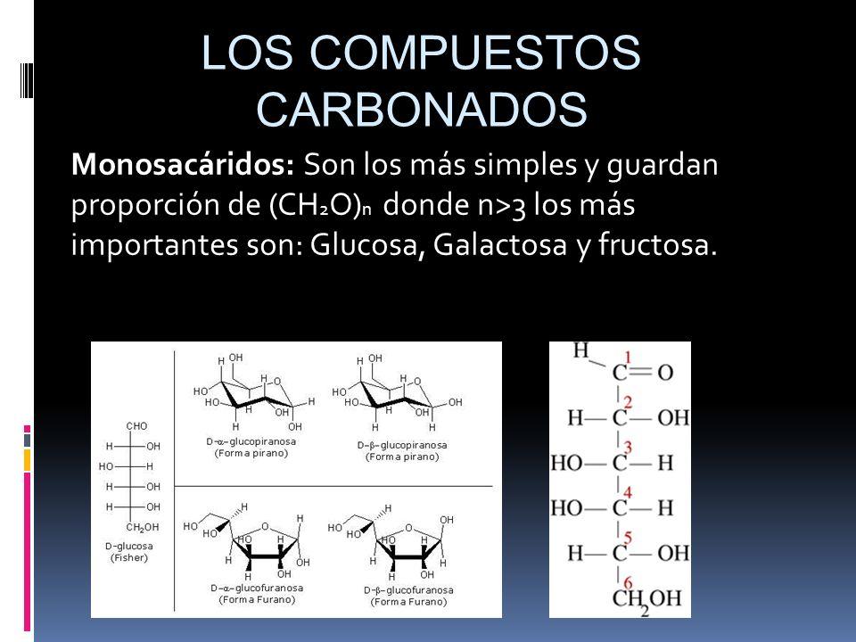 Monosacáridos: Son los más simples y guardan proporción de (CH 2 O) n donde n>3 los más importantes son: Glucosa, Galactosa y fructosa. LOS COMPUESTOS