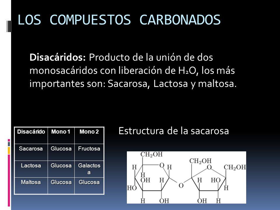 Disacáridos: Producto de la unión de dos monosacáridos con liberación de H 2 O, los más importantes son: Sacarosa, Lactosa y maltosa. Estructura de la