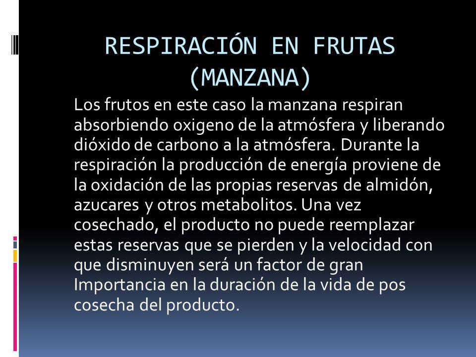 RESPIRACIÓN EN FRUTAS (MANZANA) Los frutos en este caso la manzana respiran absorbiendo oxigeno de la atmósfera y liberando dióxido de carbono a la at