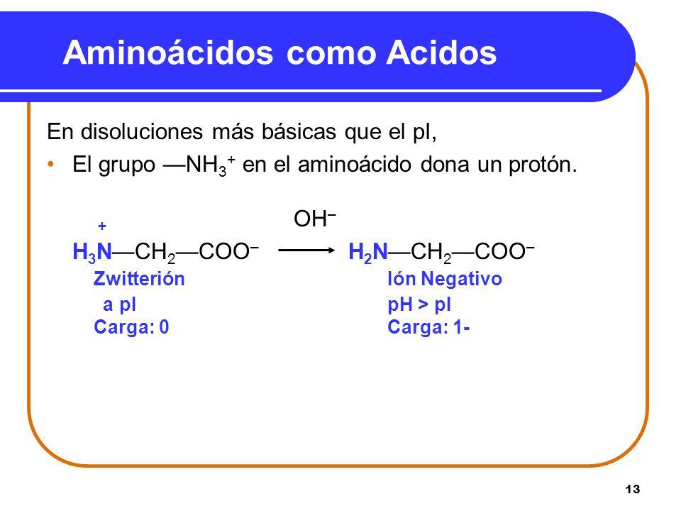 13 En disoluciones más básicas que el pI, El grupo NH 3 + en el aminoácido dona un protón. + OH – H 3 NCH 2COO – H 2 NCH 2COO – ZwitteriónIón Negativo