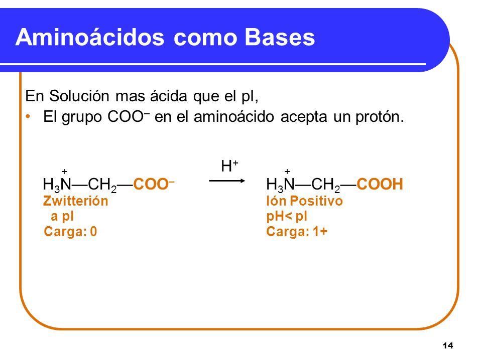 14 En Solución mas ácida que el pI, El grupo COO – en el aminoácido acepta un protón. + H + + H 3 NCH 2COO – H 3 NCH 2COOH Zwitterión Ión Positivo a p