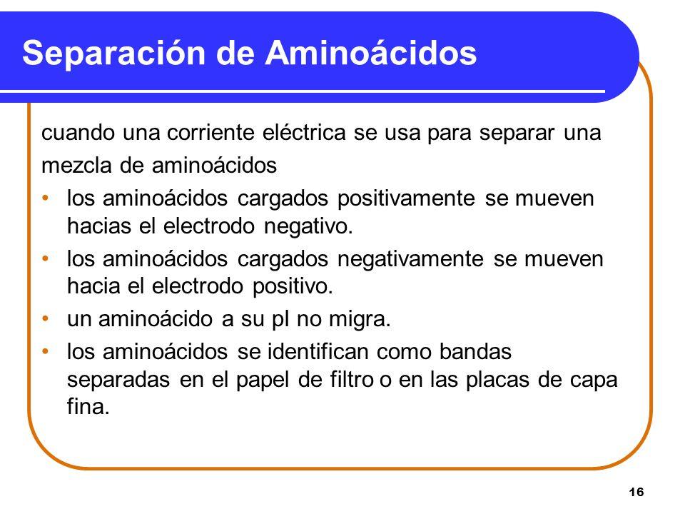 16 Separación de Aminoácidos cuando una corriente eléctrica se usa para separar una mezcla de aminoácidos los aminoácidos cargados positivamente se mu