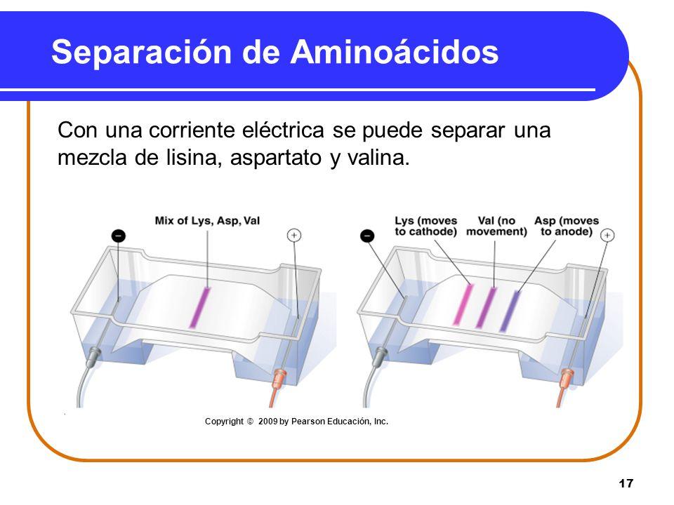 17 Separación de Aminoácidos Con una corriente eléctrica se puede separar una mezcla de lisina, aspartato y valina. Copyright © 2009 by Pearson Educac