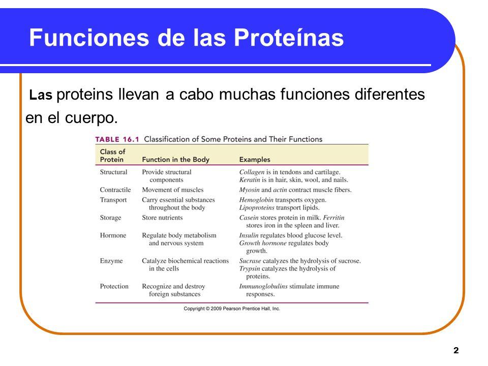 2 Funciones de las Proteínas Las proteins llevan a cabo muchas funciones diferentes en el cuerpo.