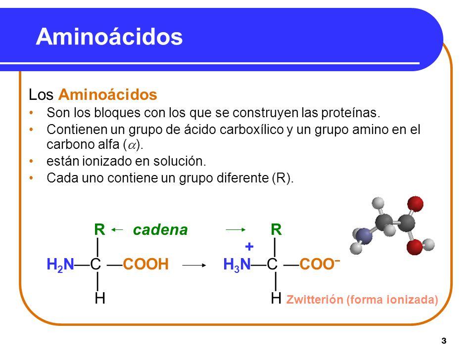 14 En Solución mas ácida que el pI, El grupo COO – en el aminoácido acepta un protón.