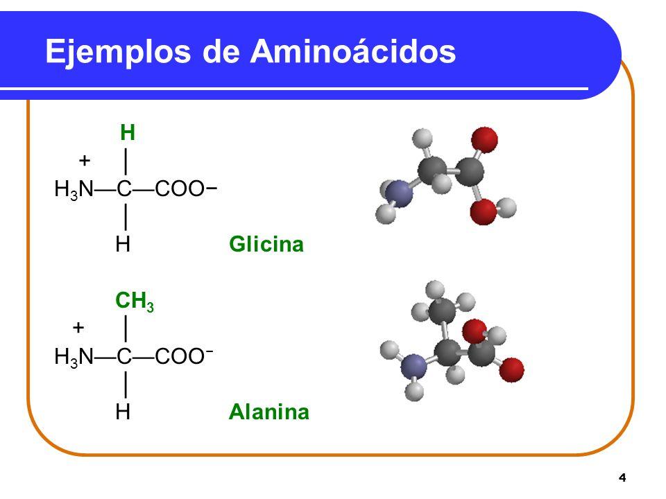5 Tipos de Aminoácidos Los Aminoácidos se clasifican como No polar (hidrdeóbico) con cadenas de hidrocarburos.