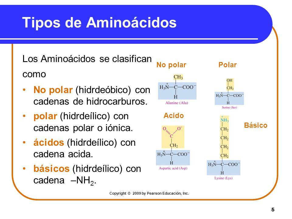 5 Tipos de Aminoácidos Los Aminoácidos se clasifican como No polar (hidrdeóbico) con cadenas de hidrocarburos. polar (hidrdeílico) con cadenas polar o