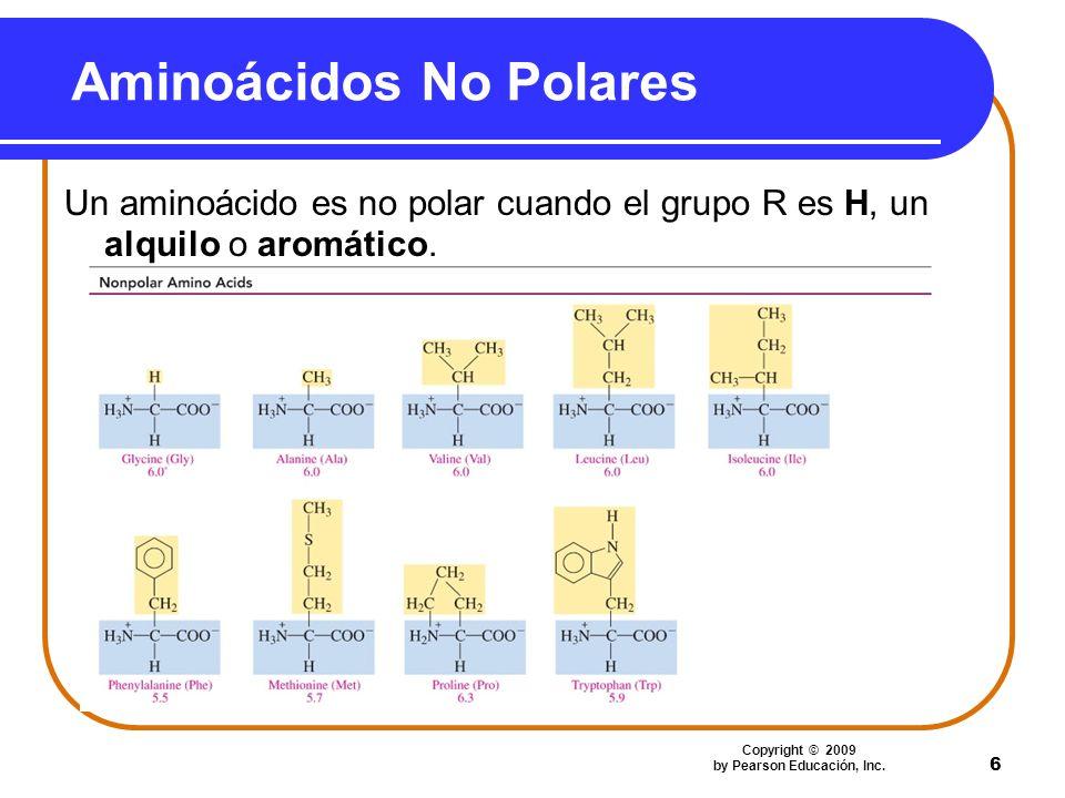 6 Aminoácidos No Polares Un aminoácido es no polar cuando el grupo R es H, un alquilo o aromático. Copyright © 2009 by Pearson Educación, Inc.