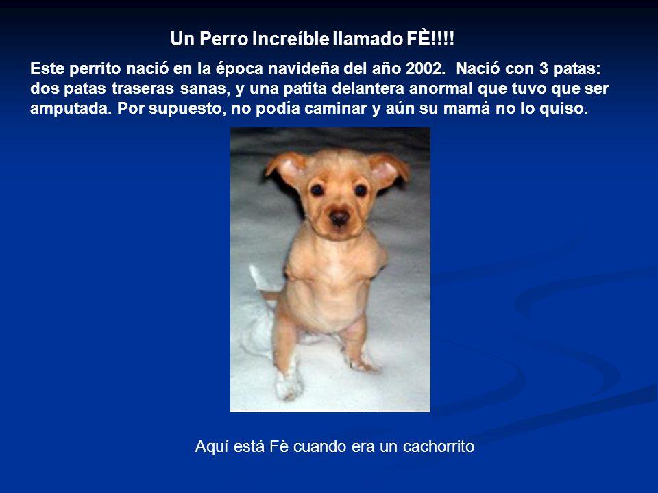 Un Perro Increíble llamado FÈ!!!. Este perrito nació en la época navideña del año 2002.