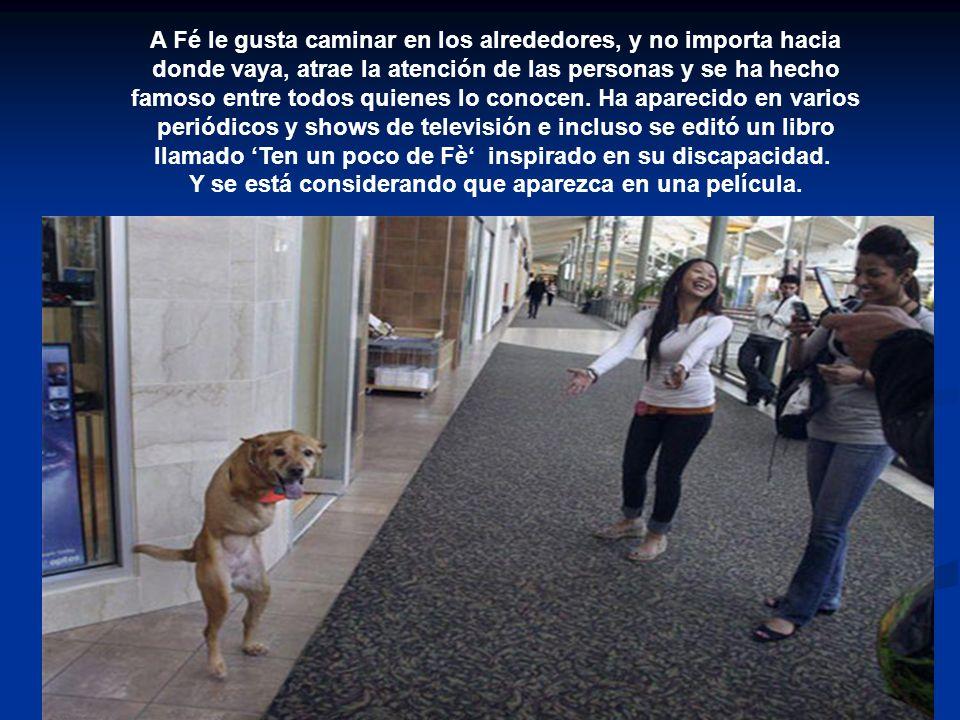 A Fé le gusta caminar en los alrededores, y no importa hacia donde vaya, atrae la atención de las personas y se ha hecho famoso entre todos quienes lo conocen.