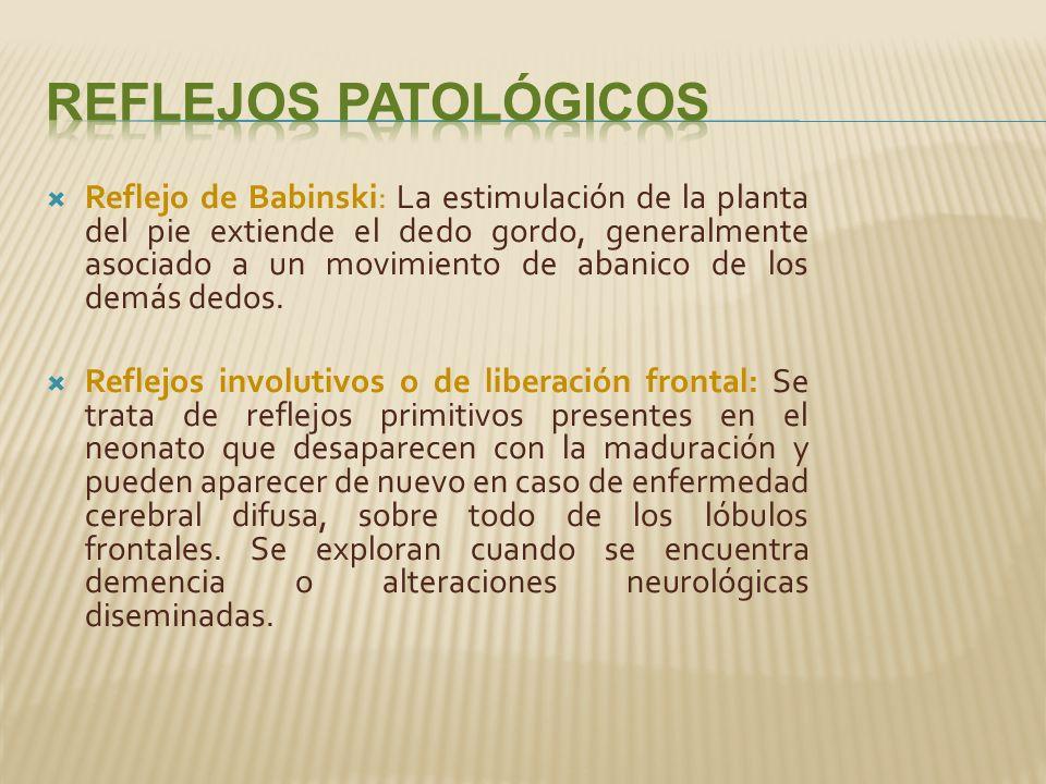 Reflejo de Babinski: La estimulación de la planta del pie extiende el dedo gordo, generalmente asociado a un movimiento de abanico de los demás dedos.