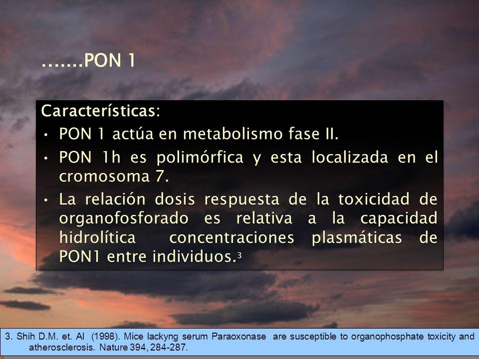 .......PON 1 Características: PON 1 actúa en metabolismo fase II.