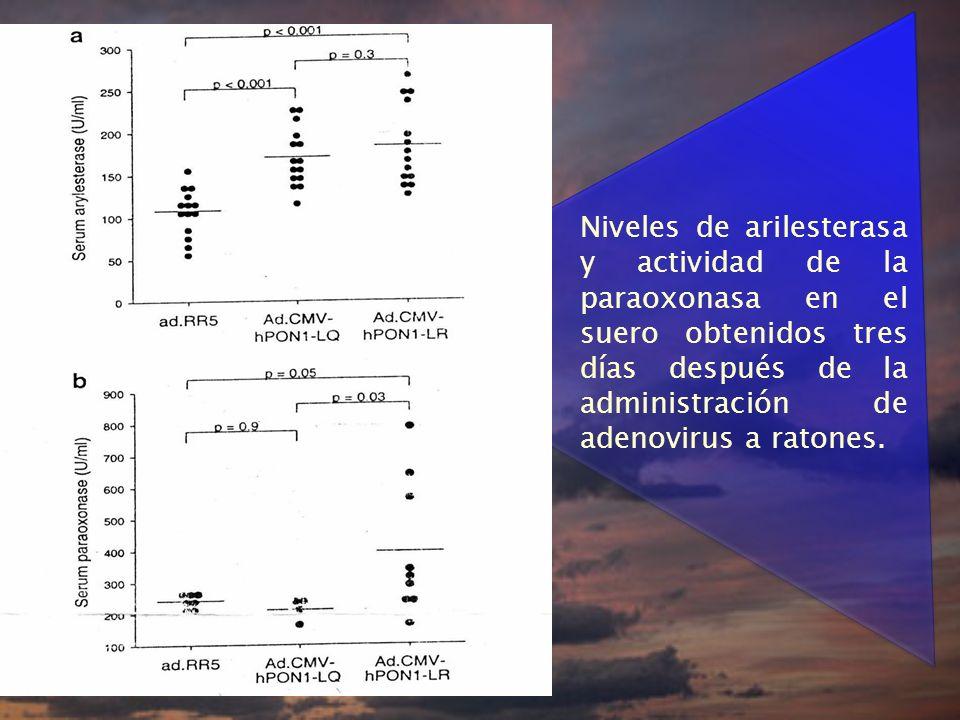 Niveles de arilesterasa y actividad de la paraoxonasa en el suero obtenidos tres días después de la administración de adenovirus a ratones.