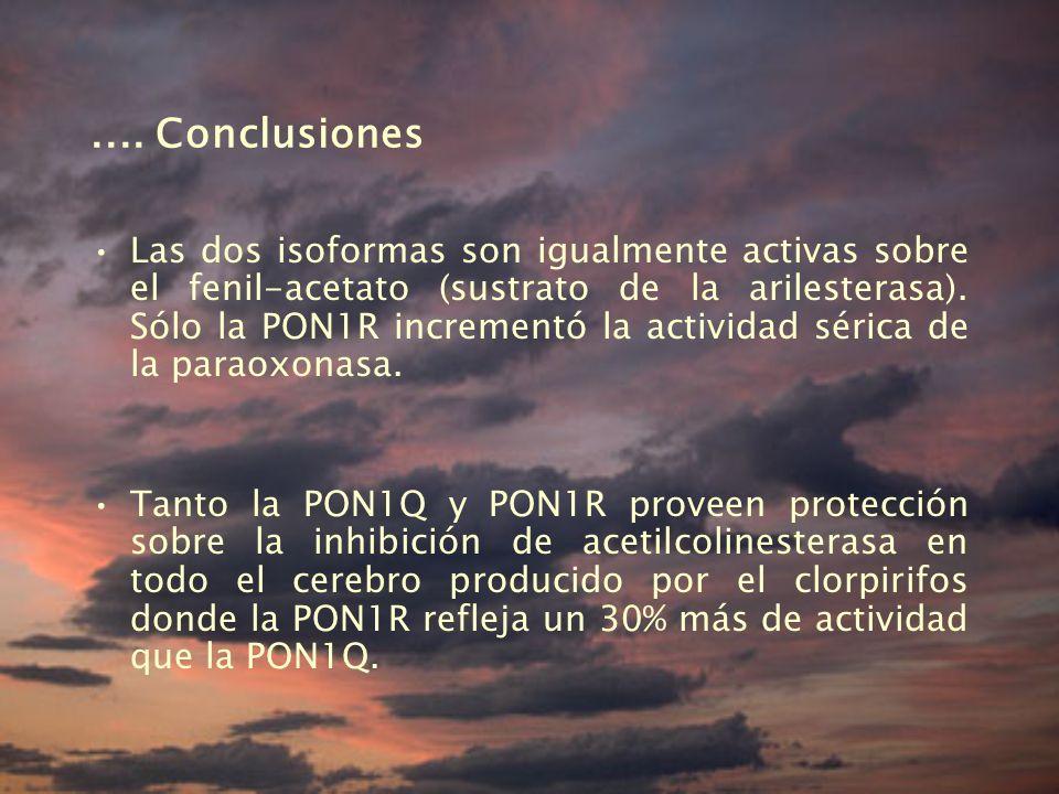 .... Conclusiones Las dos isoformas son igualmente activas sobre el fenil-acetato (sustrato de la arilesterasa). Sólo la PON1R incrementó la actividad