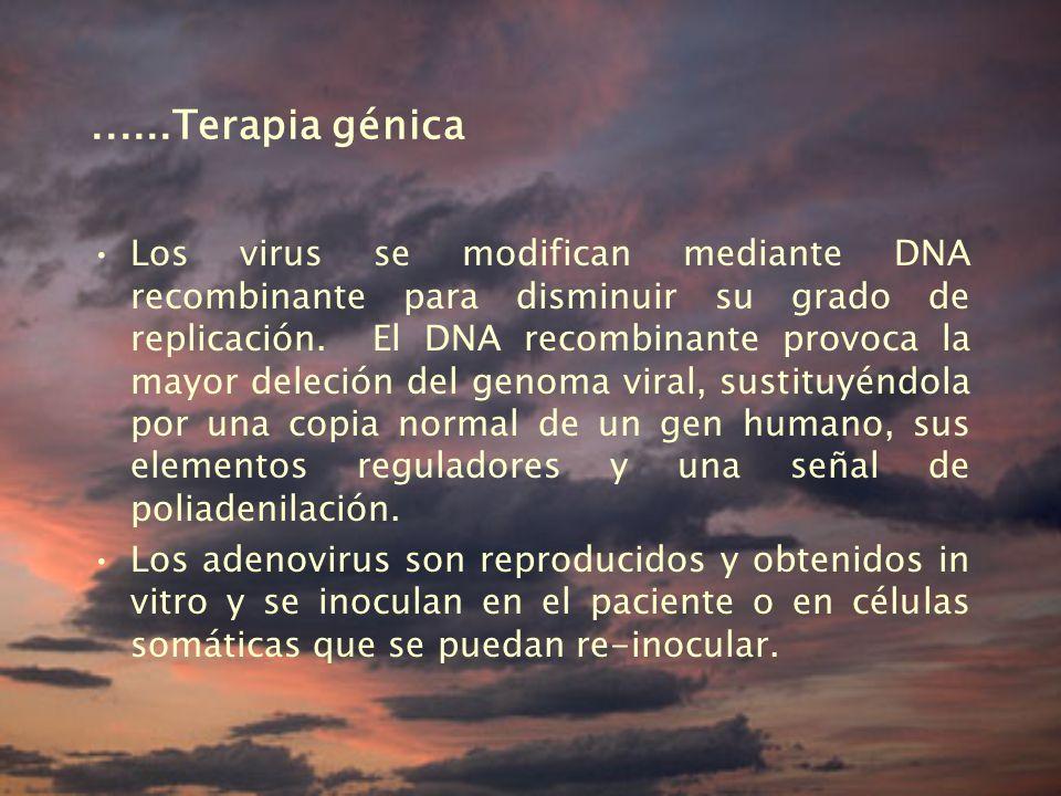 ......Terapia génica Los virus se modifican mediante DNA recombinante para disminuir su grado de replicación.
