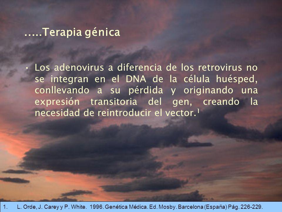 .....Terapia génica Los adenovirus a diferencia de los retrovirus no se integran en el DNA de la célula huésped, conllevando a su pérdida y originando una expresión transitoria del gen, creando la necesidad de reintroducir el vector.