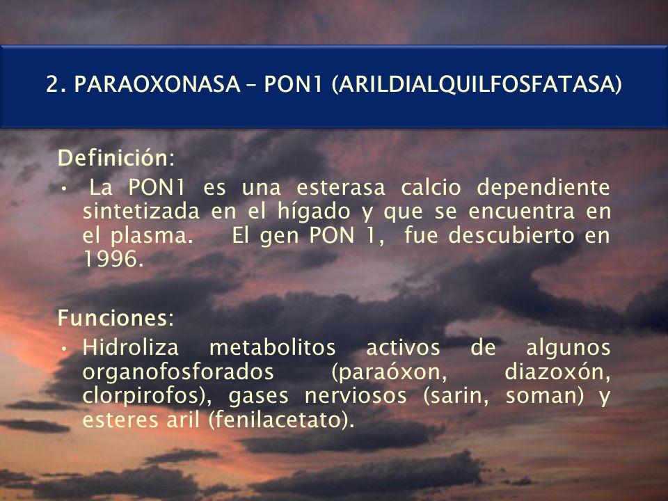 2. PARAOXONASA – PON1 (ARILDIALQUILFOSFATASA) Definición: La PON1 es una esterasa calcio dependiente sintetizada en el hígado y que se encuentra en el