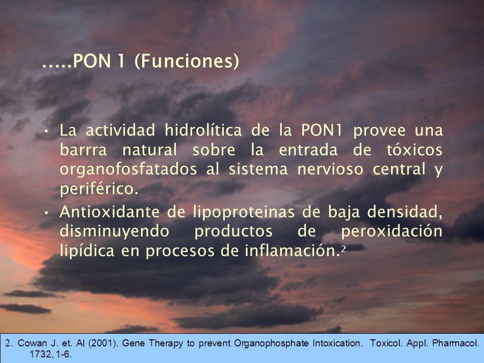 .....PON 1 (Funciones) La actividad hidrolítica de la PON1 provee una barrra natural sobre la entrada de tóxicos organofosfatados al sistema nervioso central y periférico.