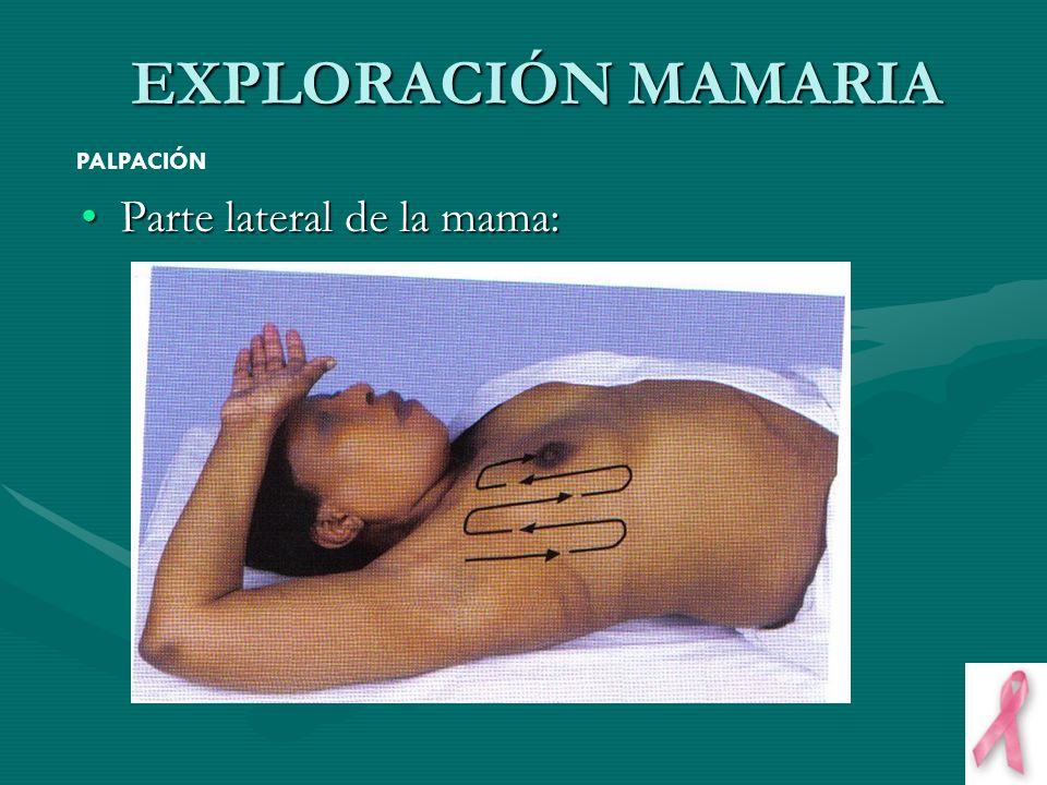 Parte lateral de la mama:Parte lateral de la mama: EXPLORACIÓN MAMARIA PALPACIÓN