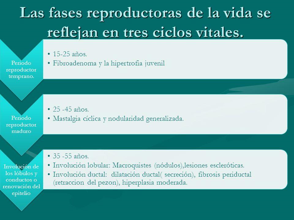 Las fases reproductoras de la vida se reflejan en tres ciclos vitales. Periodo reproductor temprano. 15-25 años. Fibroadenoma y la hipertrofia juvenil