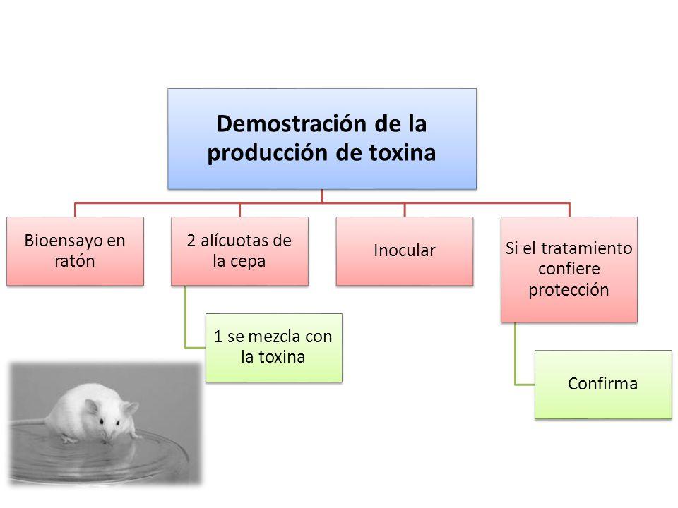 Demostración de la producción de toxina Bioensayo en ratón 2 alícuotas de la cepa 1 se mezcla con la toxina Inocular Si el tratamiento confiere protec