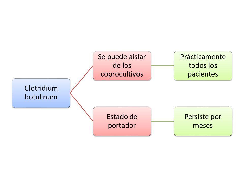 Clotridium botulinum Se puede aislar de los coprocultivos Prácticamente todos los pacientes Estado de portador Persiste por meses