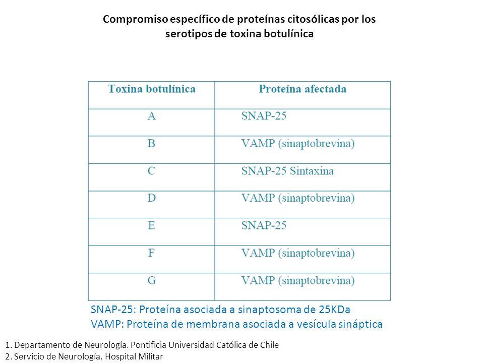 Compromiso específico de proteínas citosólicas por los serotipos de toxina botulínica SNAP-25: Proteína asociada a sinaptosoma de 25KDa VAMP: Proteína