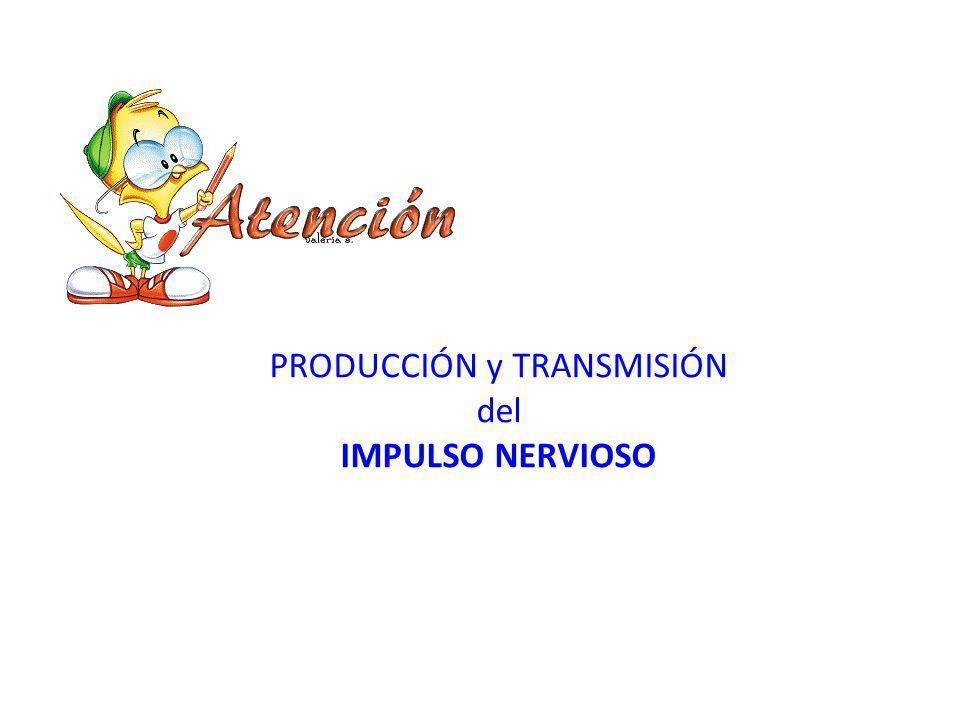 h tt p://4.bp.blogspot.com/- AECdkPpBGoM/T3O04fYt7cI/ AAAAAAAAAZY/iaMG9RL2VLc /s1600/atencion3.gif PRODUCCIÓN y TRANSMISIÓN del IMPULSO NERVIOSO