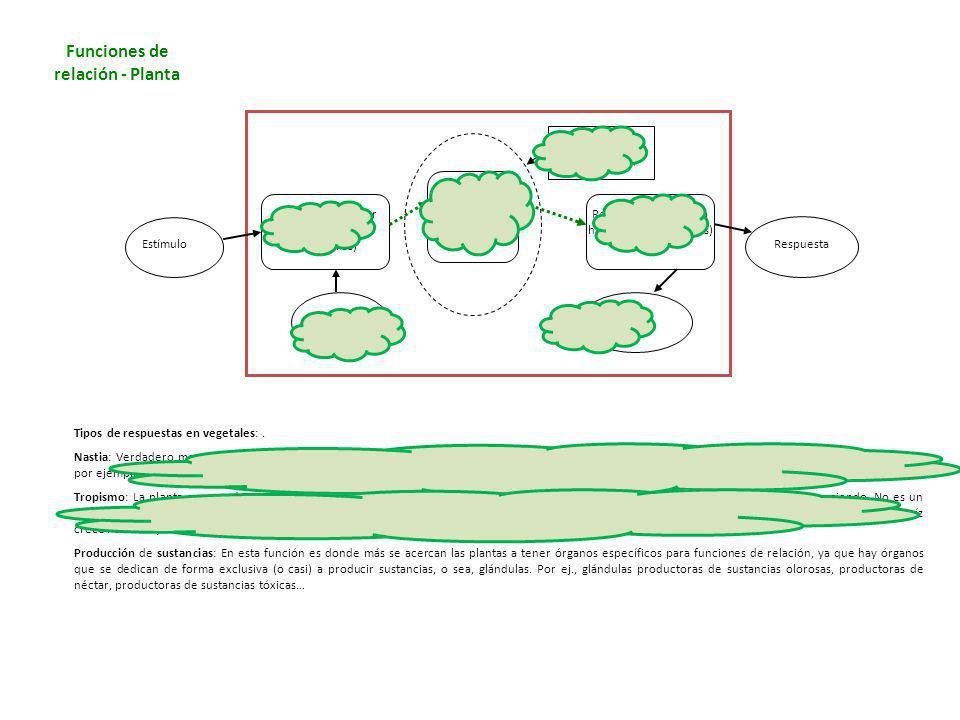 Tipos de respuestas en vegetales:. Nastia: Verdadero movimiento producido por cambios en el contenido de agua de ciertas células, que se hinchan o des