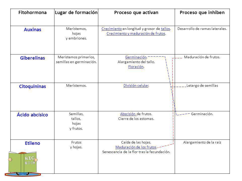 http://e- ducativa.catedu.es/44700165/aula/archivos/re positorio//750/966/html/3_hormonas_vegetal es.html FitohormonaLugar de formaciónProceso que act