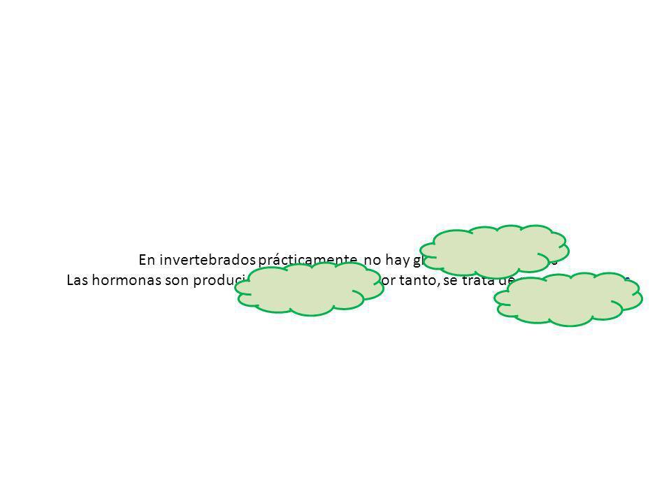 En invertebrados prácticamente no hay glándulas endocrinas Las hormonas son producidas por neuronas, por tanto, se trata de neurohormonas
