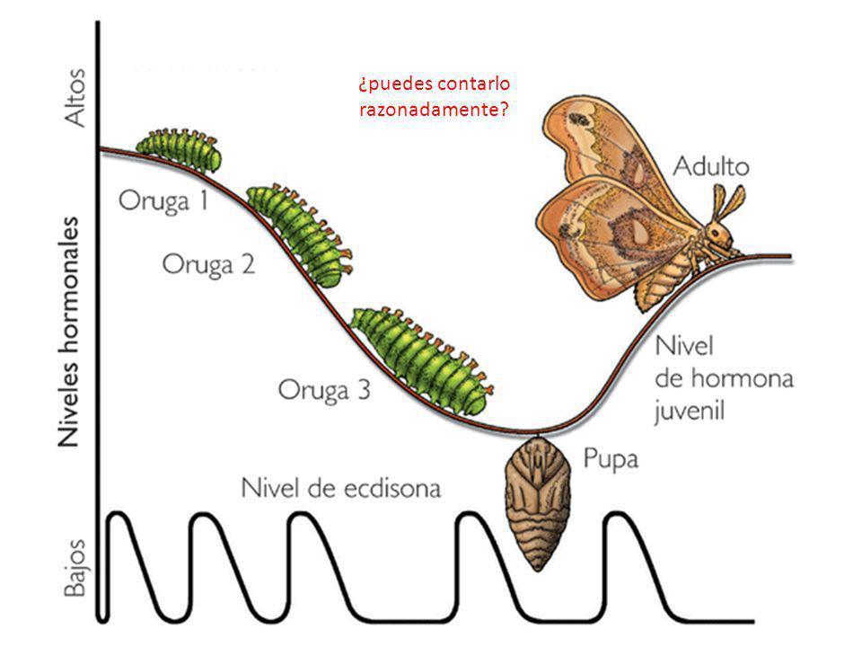 http://co.kalipedia.com/ciencias-vida/tema/complejo-control-endocrino- artropodos.html?x1=20070417klpcnavid_155.Kes&x=20070417klpcnavid_154.Kes ¿puede