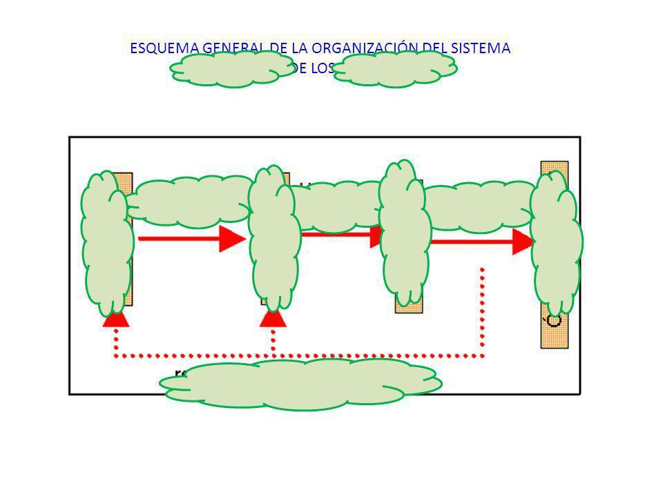http://www.dav.sceu.frba.utn.edu.ar/homovid ens/brunner/TRABAJO%20FINAL/imagenes/es quema_control_hormonal.gif ESQUEMA GENERAL DE LA ORGANIZACIÓN DEL