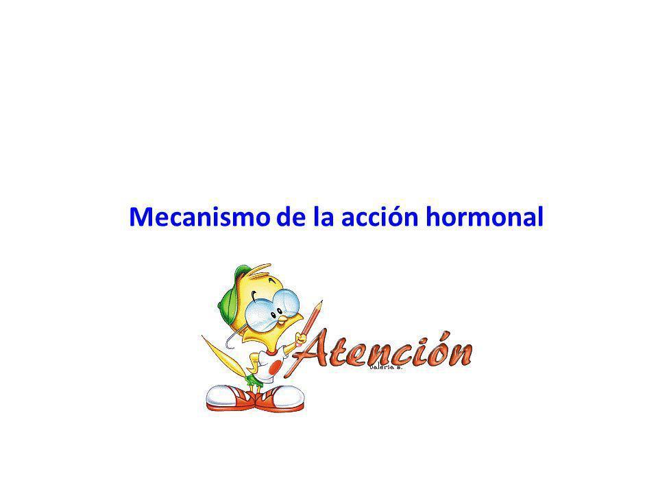 Mecanismo de la acción hormonal h tt p://4.bp.blogspot.com/- AECdkPpBGoM/T3O04fYt7cI/ AAAAAAAAAZY/iaMG9RL2VLc /s1600/atencion3.gif