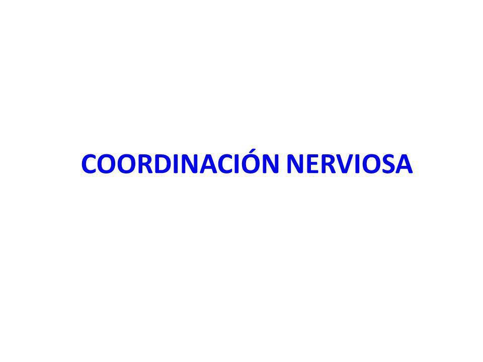 COORDINACIÓN NERVIOSA