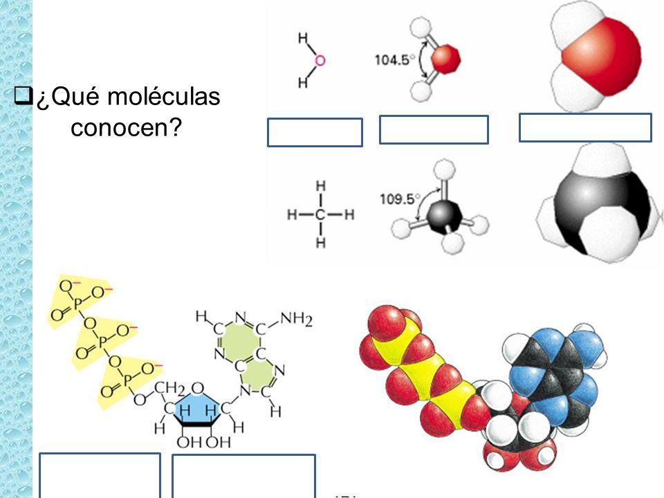 ¿Qué moléculas conocen?