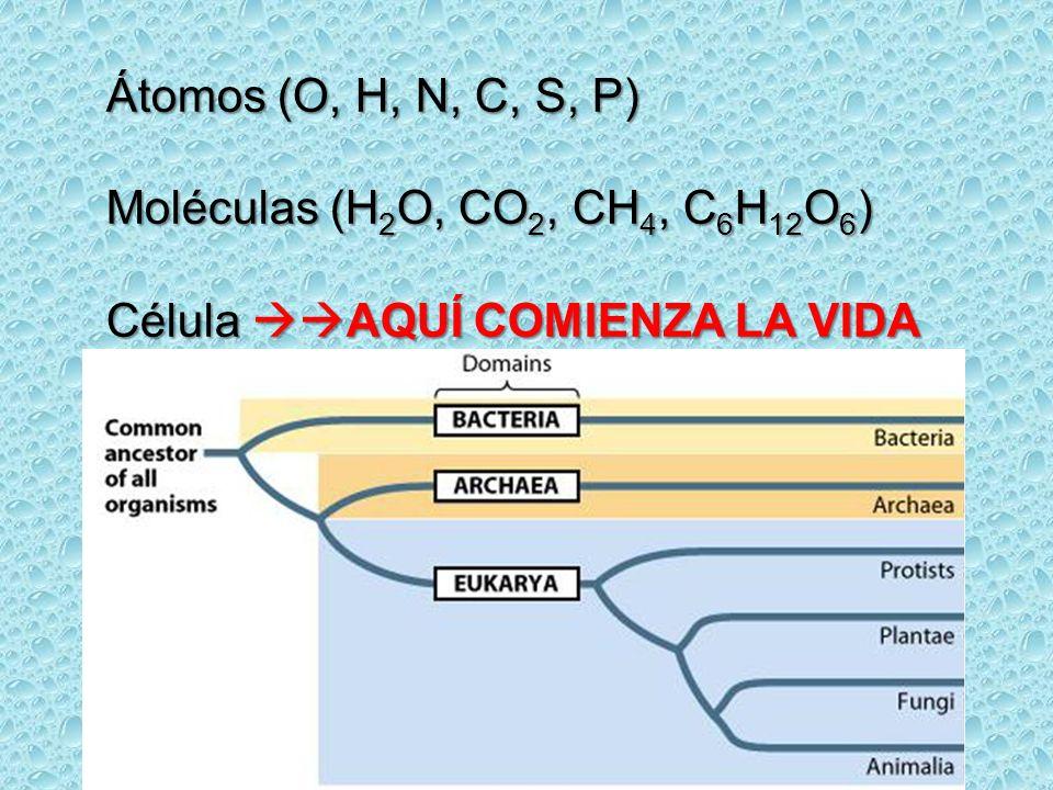 Átomos (O, H, N, C, S, P) Moléculas (H 2 O, CO 2, CH 4, C 6 H 12 O 6 ) Célula AQUÍ COMIENZA LA VIDA