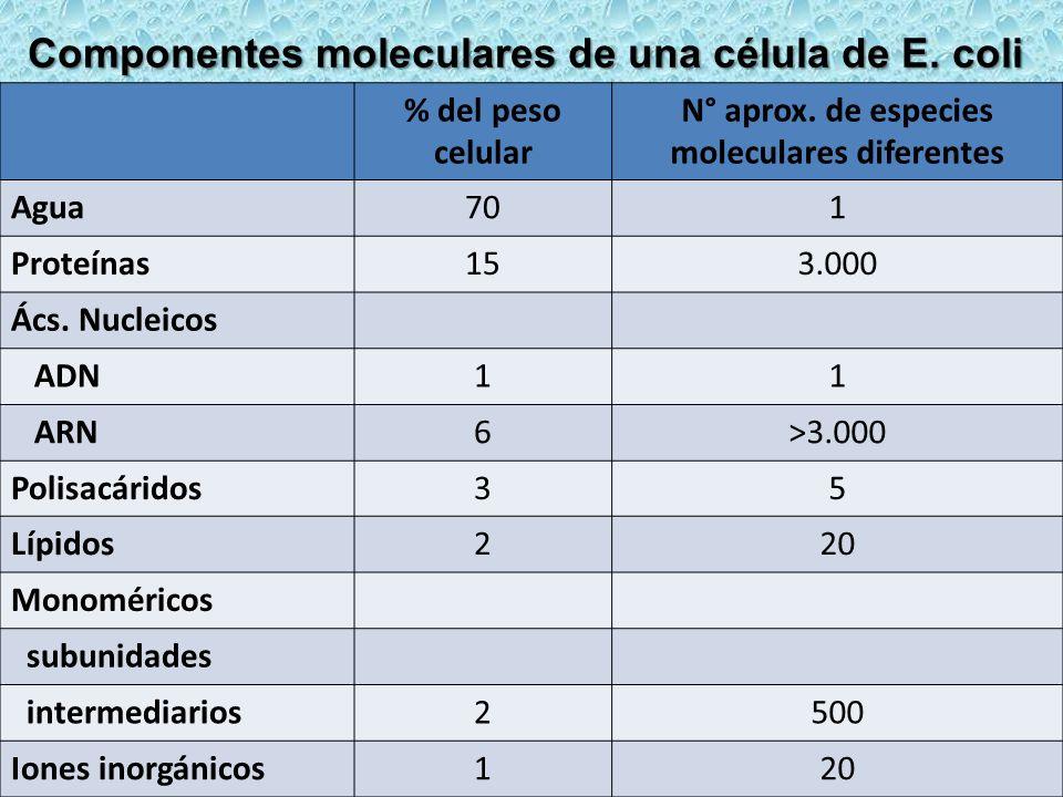 % del peso celular N° aprox. de especies moleculares diferentes Agua701 Proteínas153.000 Ács. Nucleicos ADN11 ARN6>3.000 Polisacáridos35 Lípidos220 Mo