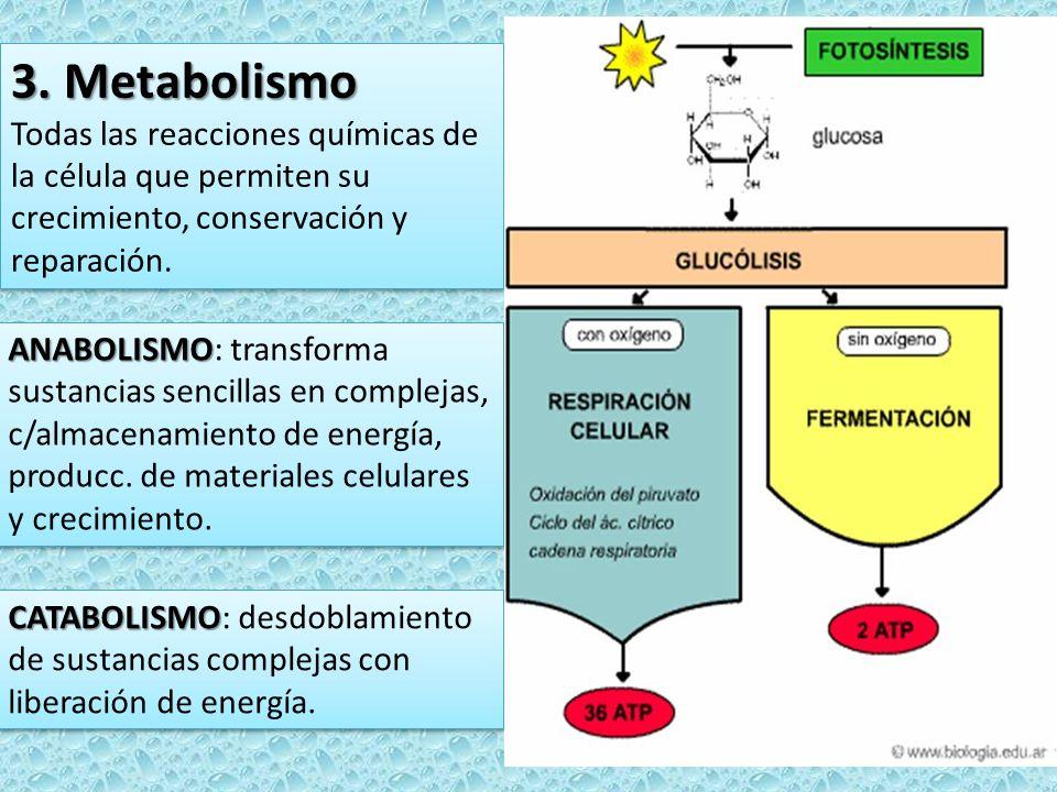 3. Metabolismo Todas las reacciones químicas de la célula que permiten su crecimiento, conservación y reparación. 3. Metabolismo Todas las reacciones