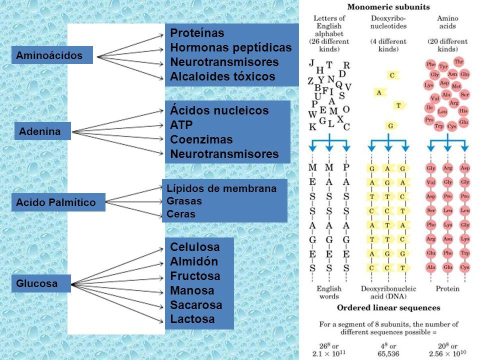 Lípidos de membrana Grasas Ceras Celulosa Almidón Fructosa Manosa Sacarosa Lactosa Proteínas Hormonas peptídicas Neurotransmisores Alcaloides tóxicos