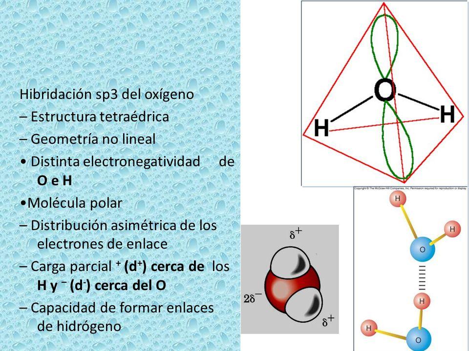 Hibridación sp3 del oxígeno – Estructura tetraédrica – Geometría no lineal Distinta electronegatividad de O e H Molécula polar – Distribución asimétri