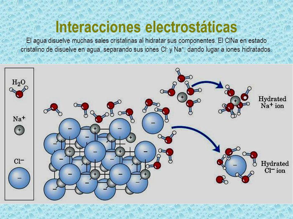 Interacciones electrostáticas El agua disuelve muchas sales cristalinas al hidratar sus componentes. El ClNa en estado cristalino de disuelve en agua,