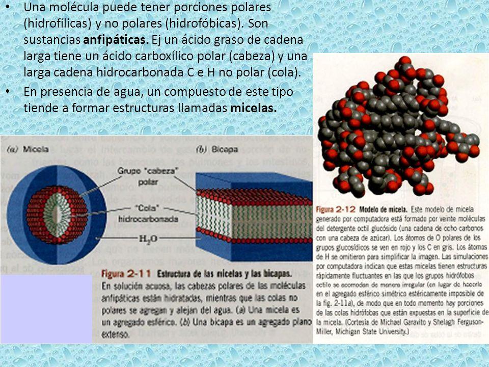 Una molécula puede tener porciones polares (hidrofílicas) y no polares (hidrofóbicas). Son sustancias anfipáticas. Ej un ácido graso de cadena larga t