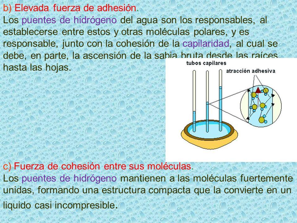 b) Elevada fuerza de adhesión. Los puentes de hidrógeno del agua son los responsables, al establecerse entre estos y otras moléculas polares, y es res