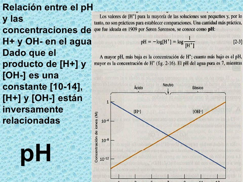 pH Relación entre el pH y las concentraciones de H+ y OH- en el agua. Dado que el producto de [H+] y [OH-] es una constante [10-14], [H+] y [OH-] está
