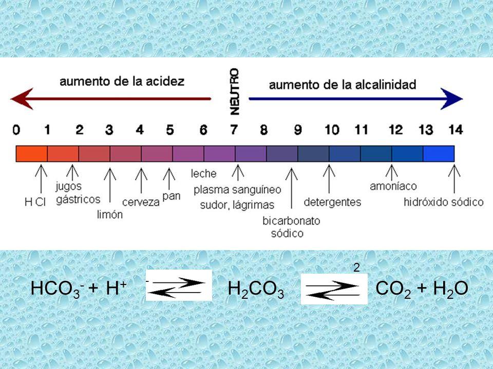 2 HCO 3 - + H + H 2 CO 3 CO 2 + H 2 O