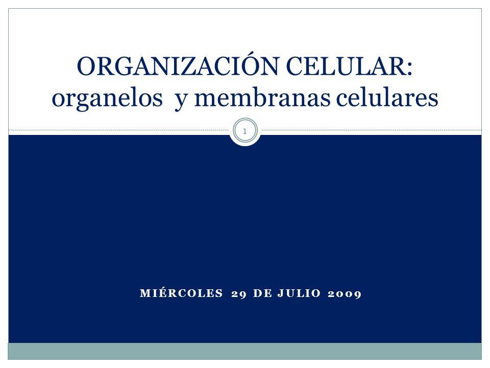 Células eucariotas 2 Células cuyos organelos están rodeados por membranas Poseen núcleo verdadero Ventajas de poseer compartimentos separados: 1.