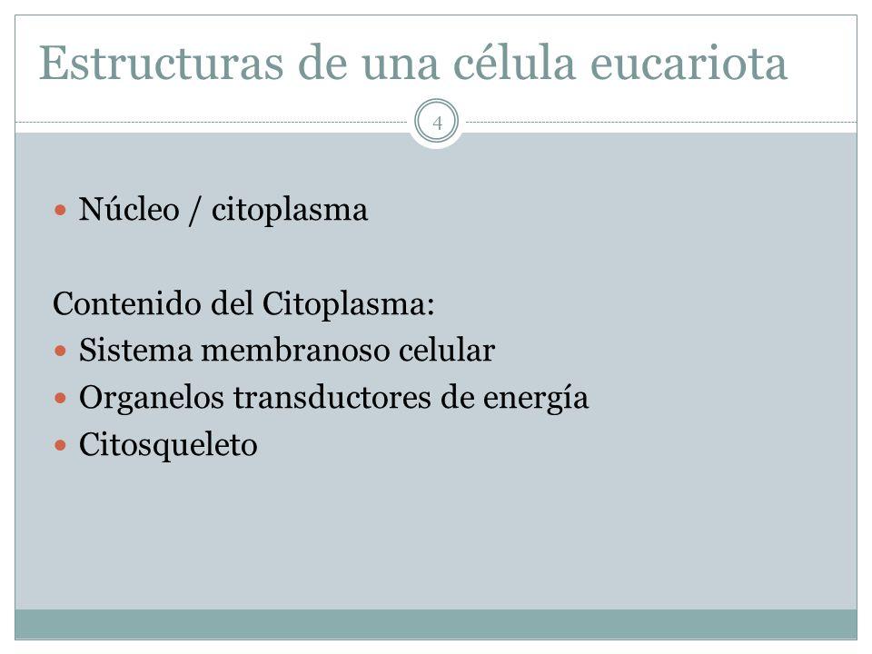 15 Las características anfotéricas de los fosfolípidos les permiten forman la bicapa que forma la membrana.