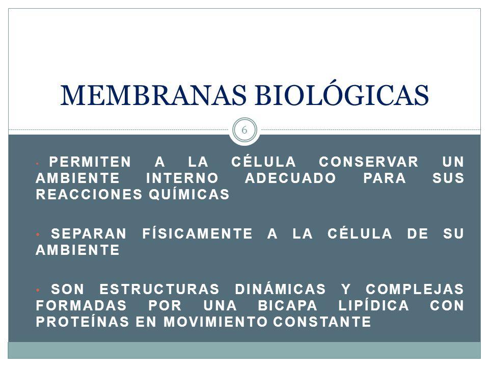 Composición de la membrana plasmática 7 Bicapa lipídica con proteínas + pequeñas cantidades de ARN Los principales lípidos componentes son los fosfolípidos que le confieren sus características y propiedades físicas y además forman la bicapa Las proteínas pueden ser de dos tipos: proteínas transmembrana (integrales) o proteínas periféricas La apariencia es de un mosaico Fotografías tomadas de: http://senior.british.edu.uy/odiaz/membrana%20celular.htm, a menos que esté de otra forma indicado en la diapositivahttp://senior.british.edu.uy/odiaz/membrana%20celular.htm
