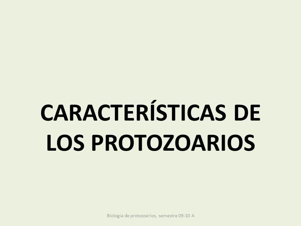 CARACTERÍSTICAS DE LOS PROTOZOARIOS Biología de protozoarios, semestre 09-10 A